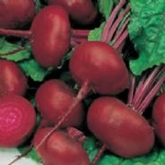 Beetroot Egyptian - Appx 750 seeds